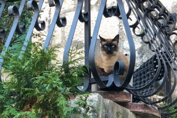A cat peering from a balcony in Trogir, Croatia