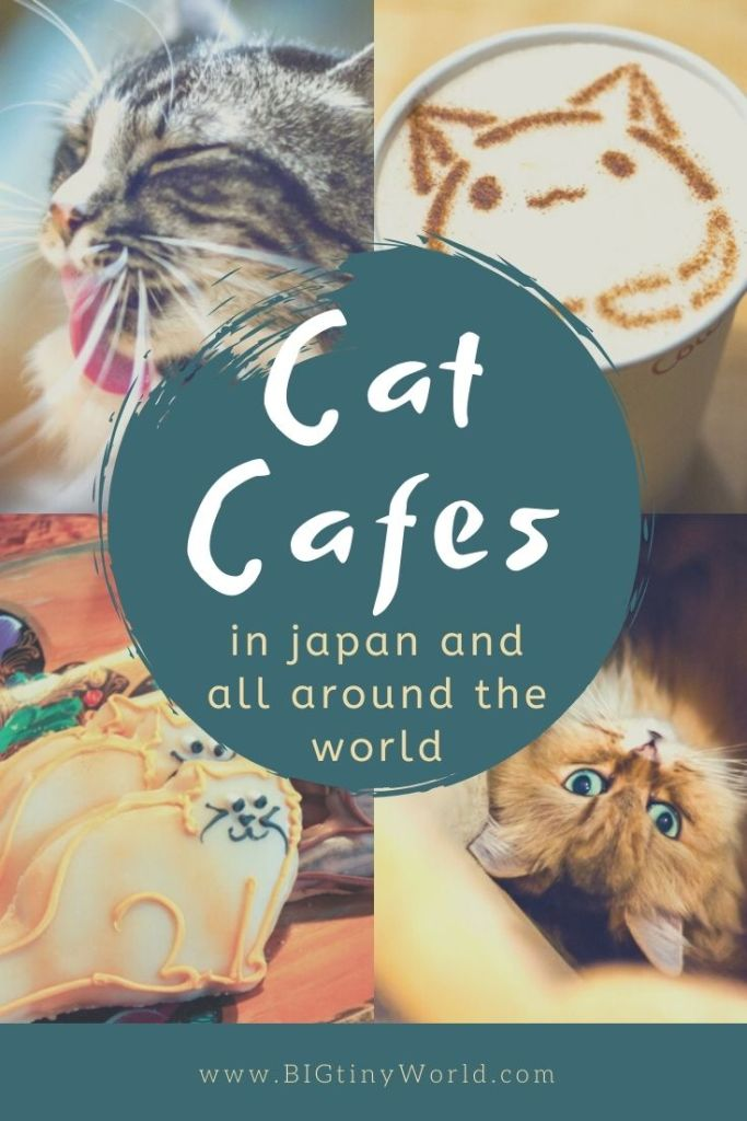 Cat Cafes in Japan and All Around the World | Japan is known for their cat cafes, so we couldn't visit without visiting a couple. Since, we've frequented cat cafes all around the world! Read all about them here! | BIG tiny World Travel | #bigtinyworld #catcafes #japancats #travel #traveljapan