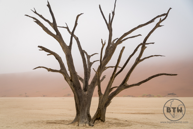 Dead tree in the foggy desert of Deadvlei in Namibia