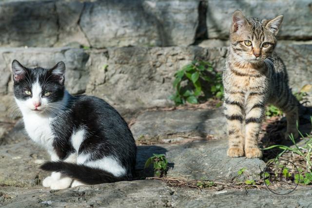 Street Cats in Istanbul Kadikoy