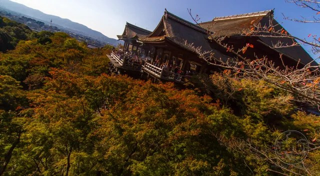 The Kiyomizu Temple floating above autumn treetops in Kyoto, Japan