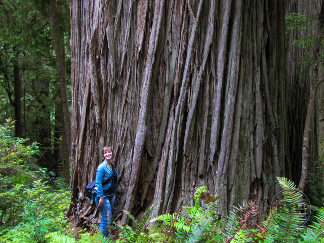 Brianna standing in front of a massive redwood tree in California