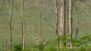 blue marsh lake wildlife ducks swimming