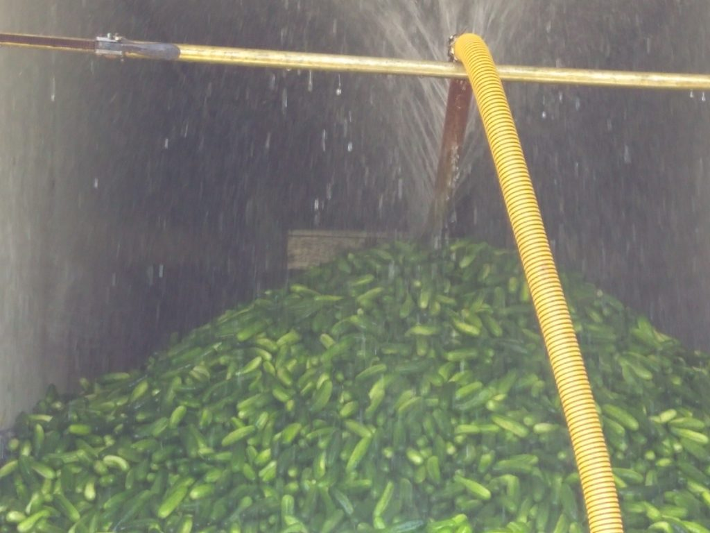 Truckload of cucumbers for pickles