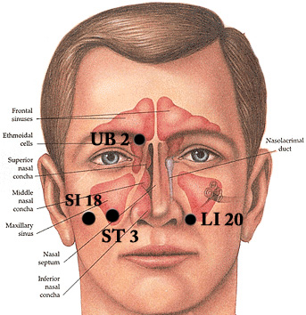 face pressure points diagram leeson motor wiring how to relieve sinus pain with acupressure – big tree