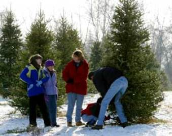 Image result for cutting your own christmas tree