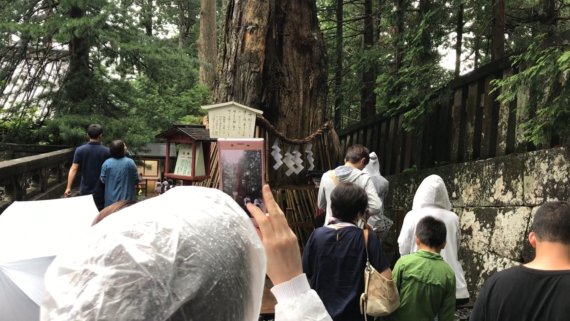 Sacred Tree - Nikko Toshogu Shrine Japan Review Blog Guide List View Video 2017 ⛩ 🏯 🌸