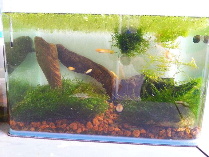 成魚の住む室外水槽