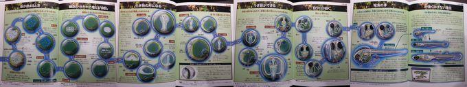 メダカ (いのちのかんさつ) 孵化までの過程