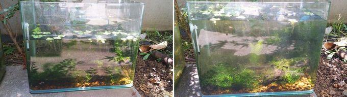 屋外水槽の水換え