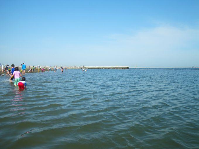 城南島海浜公園 つばさ浜 沖