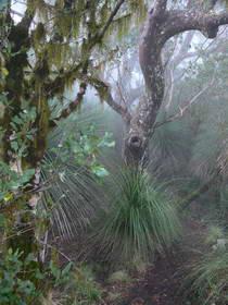 Border Ranges NP cool temperate rainforest