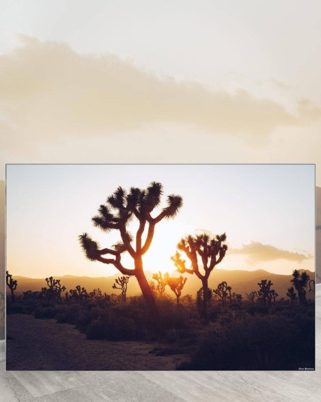 Big Biggest Massive Huge Large Largest Giant Gigantic Wall Décor Art Backlit Fabric Home Deco Artwork Artist Jared Gunderson Landscape Scenic Photography Instagram Joshua Trees Desert Sunset
