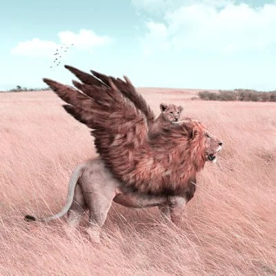 Large Surreal Lion Wings African Animal Wildlife Surreal Photography by Julien Tabet
