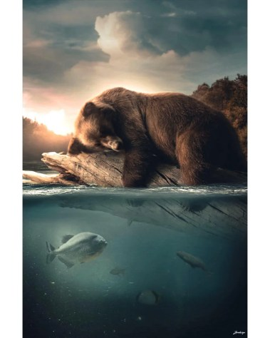 Large Surreal Brown Bear Water Portrait Animal Wildlife Surreal Photography by Zenja Gammer