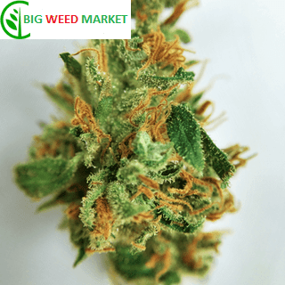 Buy Black Widow Marijuana Online