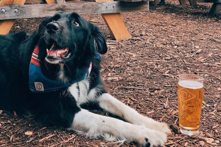 2020 austin dog friendly guide