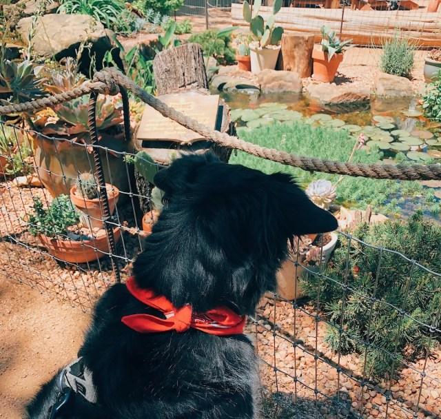 dog-friendly austin texas