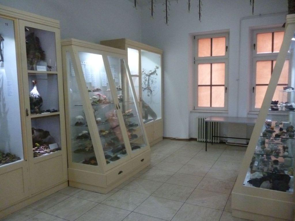 Отделение природы монастырского музея. Фото: Елена Арсениевич, CC BY-SA 3.0