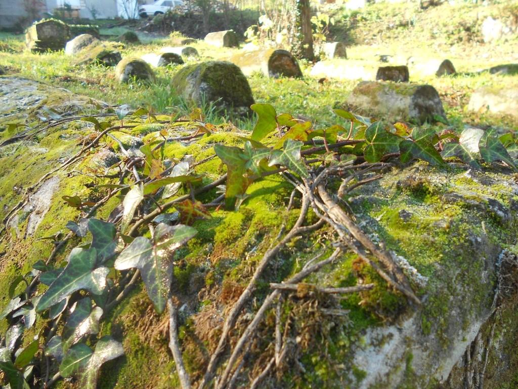 Камень, мох, плющ