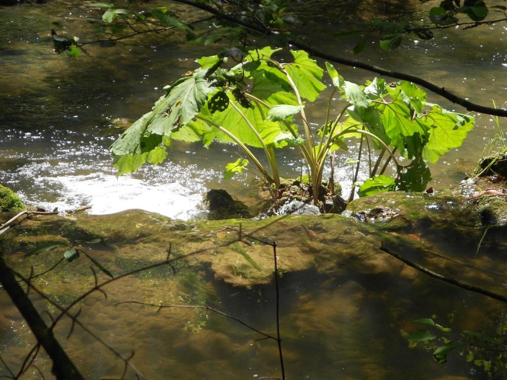 Речка Блиха. Фото: Елена Арсениевич, CC BY-SA 3.0