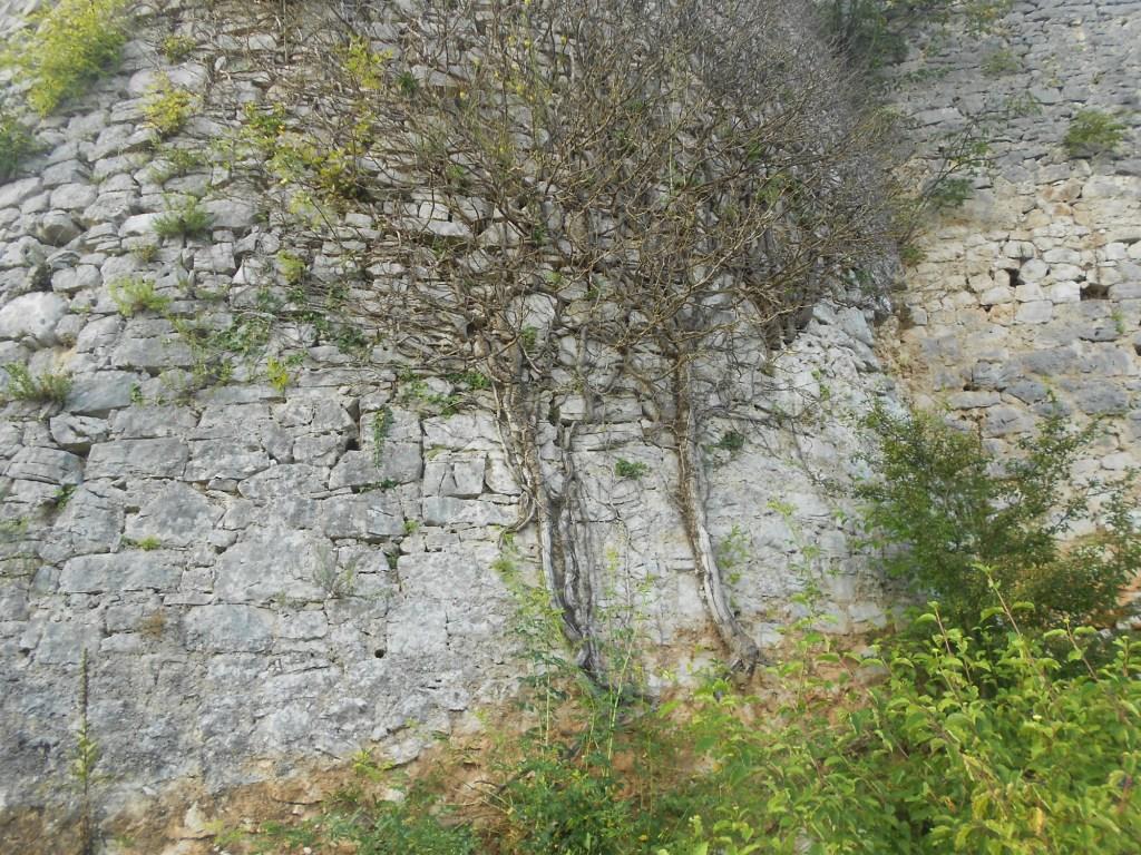 Камни и растения. Фото: Елена Арсениевич, CC BY-SA 3.0