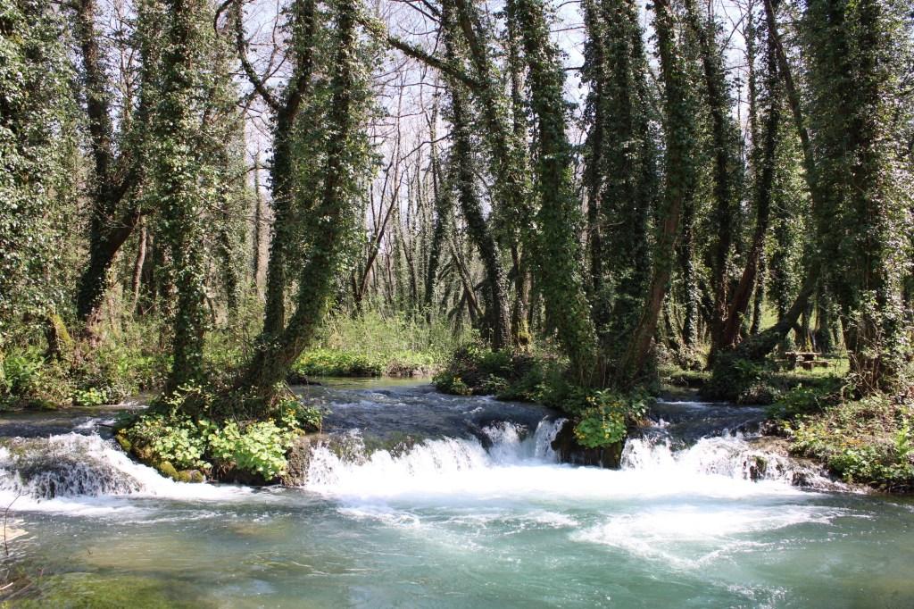 Деревья, выросшие на островках. Фото: Елена Арсениевич, CC BY-SA 3.0