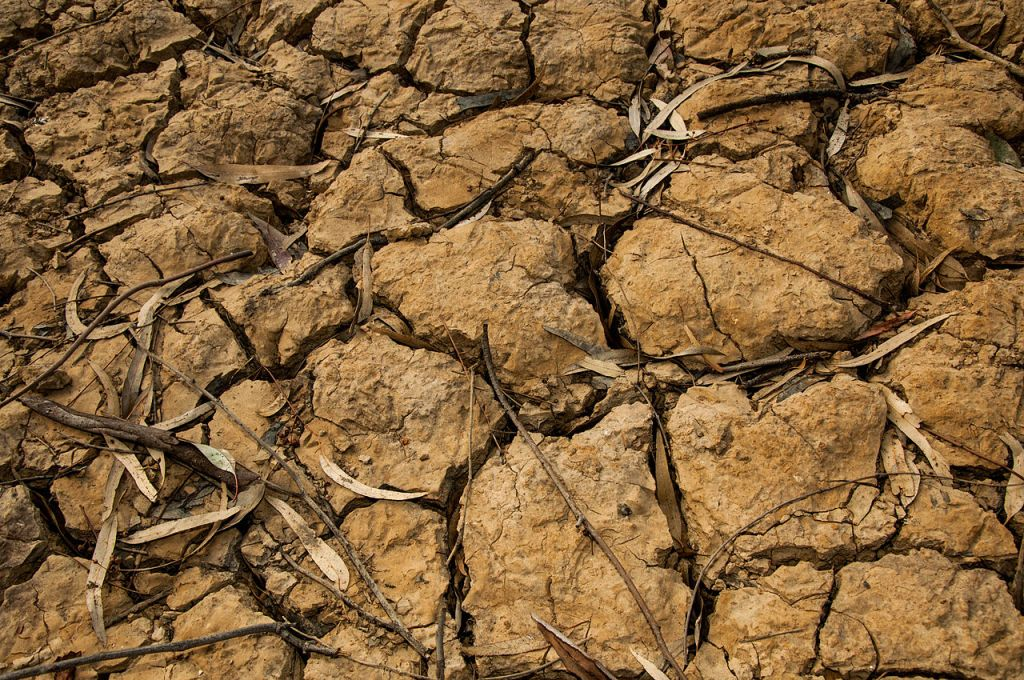 Любвеобильность змая становится причиной засухи. Jeroen Moes, CC BY-SA 2.0