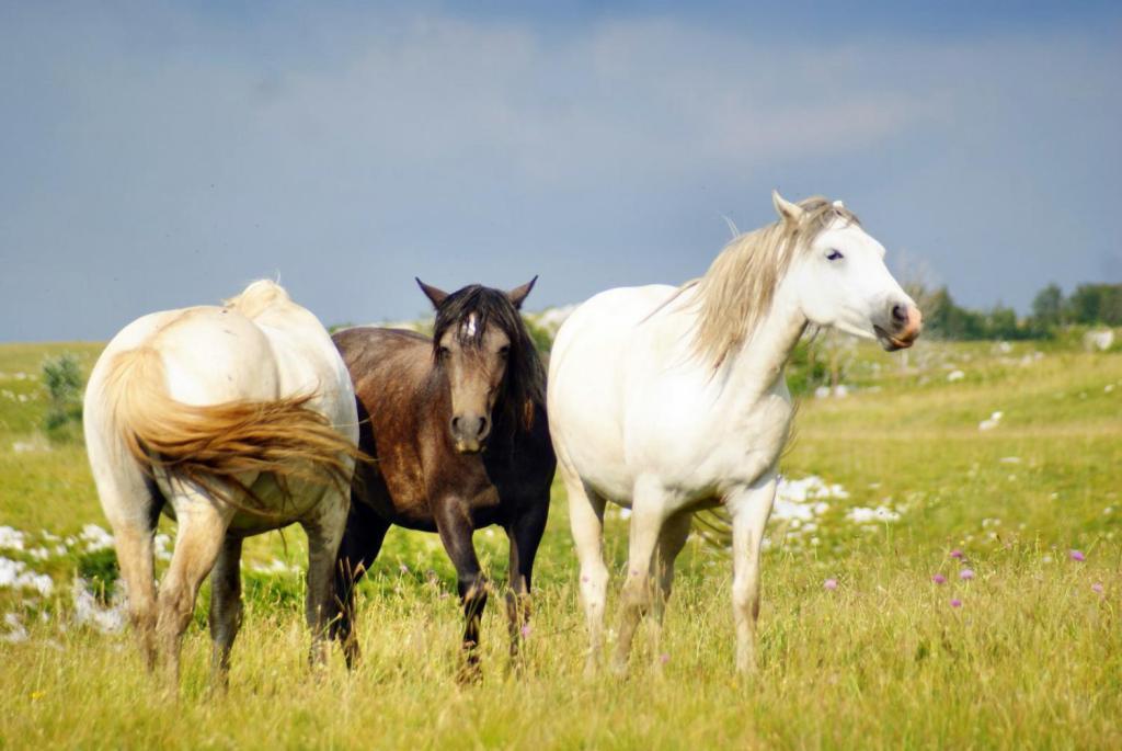 Дикие кони Ливаньского поля. Brian Eager, CC BY 2.0