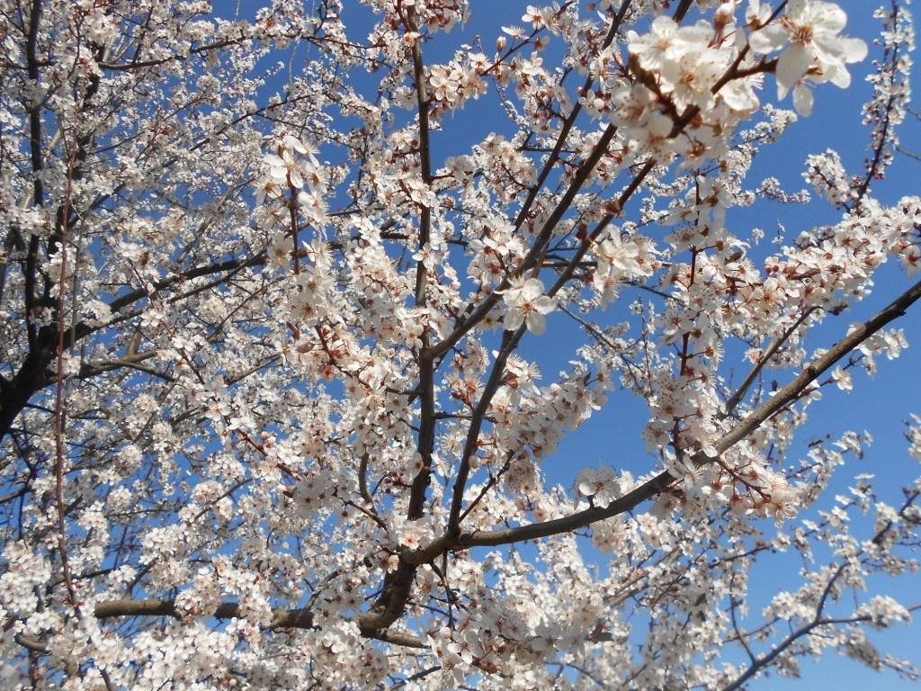 Когда в душе весна. Фото: Елена Арсениевич, CC BY-SA 3.0