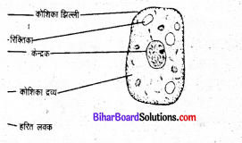 Bihar Board Class 8 Science Book Solutions