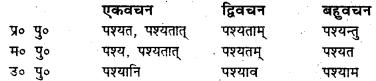 Bihar Board Class 7 Sanskrit व्याकरण धातु-रूपाणि 22