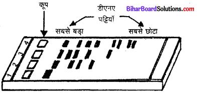 Bihar Board 12th Biology Model Question Paper 2 in Hindi 5