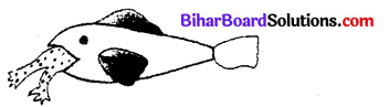 Bihar Board 12th Biology Objective Answers Chapter 13 जीव और समष्टियाँ 3