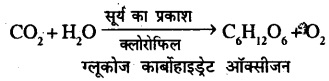 Bihar Board Class 7 Science Solutions Chapter 6 पौधों में पोषण 2