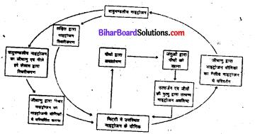 Bihar Board Class 8 Science Solutions Chapter 7 सूक्ष्मजीवों का संसार सूक्ष्मदर्शी द्वारा आँखों देखा 2
