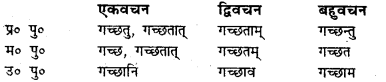 Bihar Board Class 7 Sanskrit व्याकरण धातु-रूपाणि 17