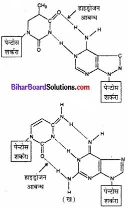 BIhar Board Class 12 Chemistry Chapter 14 जैव-अणु  img-16