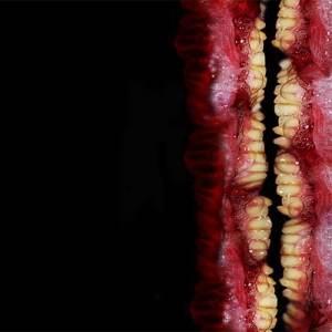 KLEFT - H+ Sexualis - DEX005 - DOMESTIC EXILE