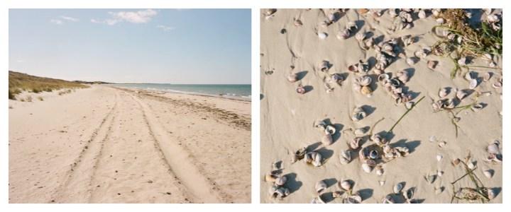 tracks and shells.jpg
