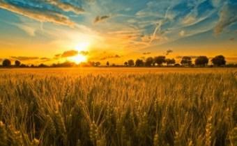 Loofhuttenfeest: een rijpe oogst