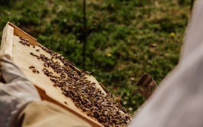 Bijentherapie: Hoe Slovenen Met Bijen Ontspannen