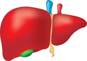 Lever en leverkanker