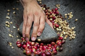 Longproblemen in de koffieproductie (1)