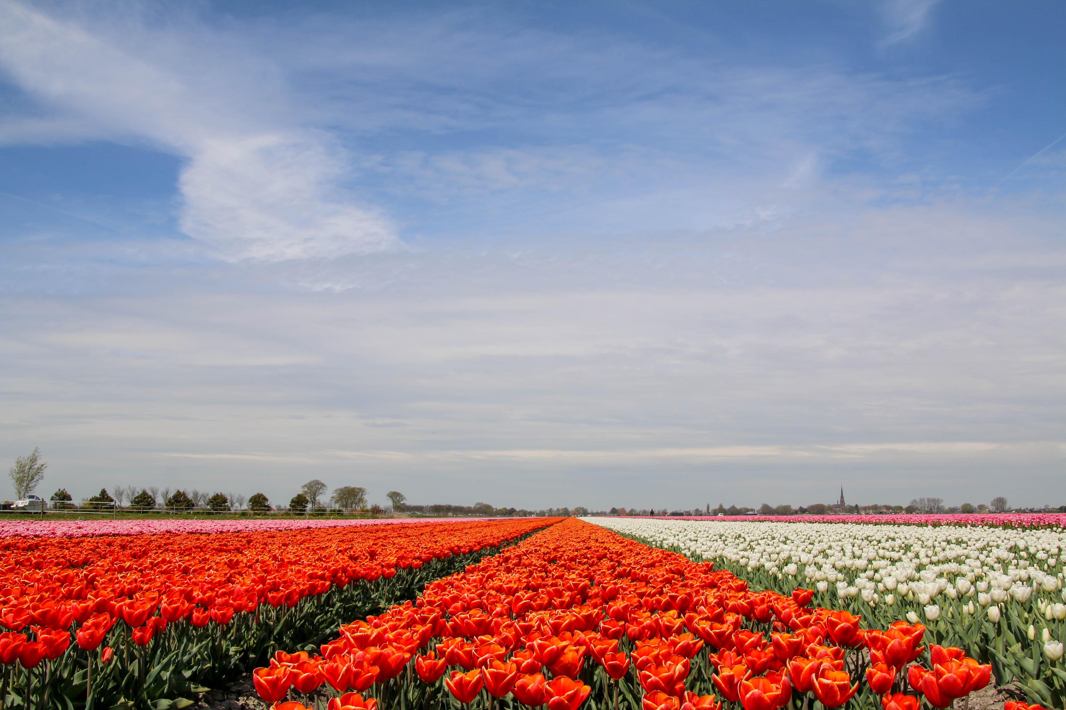 Deken Noord Holland