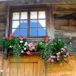 Window In Brashlian