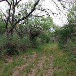 Horse trail and Bike trail