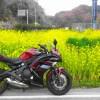 バイク 菜の花