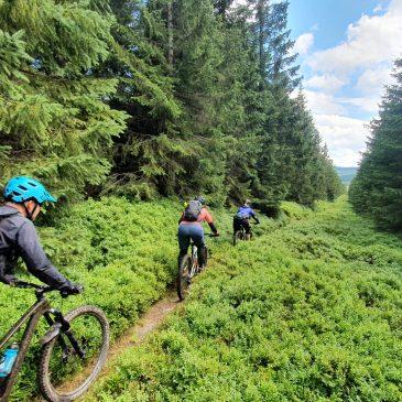 Mountainbiken im Riesengebirge in Polen/Tschechien