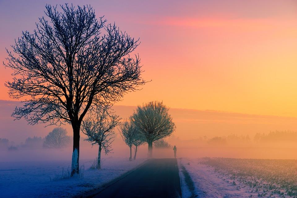 冬 霧 夜明け サンセット 自然 風景 ジョガー 道路 離れた パス 木 夕暮れ